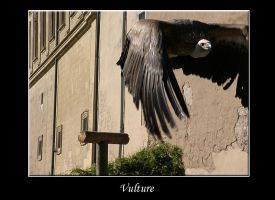 Vulture by os43