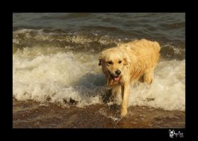 Golden -in the- Sea by Foxia