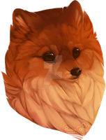 Little pom by Peace-Colby