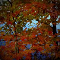 Fall Leaves I by marisamudd