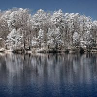 IR Trees Reflected In The Lake by LDFranklin