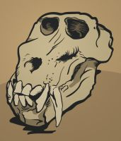 Baboon Skull Illustration by Panaos