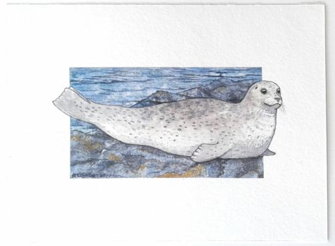 Harbour seal study by commander-salamander