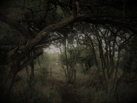 Forest Path by earthangel2222