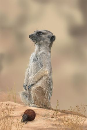 Meerkat by greedy-peri