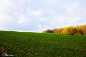 Field by Diinax3