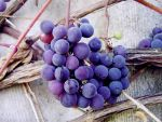 Grapes I by rosaarvensis
