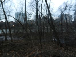 The View From Theodore Roosevelt Island by Flaherty56
