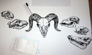 skulls - art in progress 2 by Nimgaraf