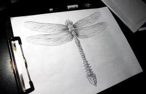 Dragonfly by Kumokazan