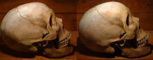 Skull-study Side-view by Marina13m