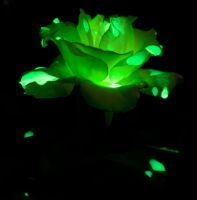 Glowing Rose by Caitiekabob
