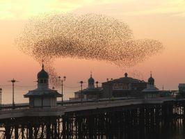 The birds going to roost. by saoirse27