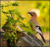Jay And Wasp by andy-j-s