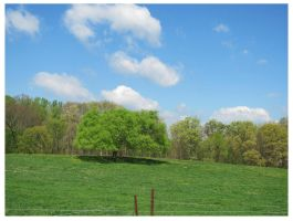 Spring Tree in Field- Old Niles Ferry Rd by CrystalMarine-Arts