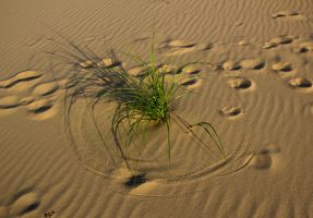 Cicles in the Sand by aydonis