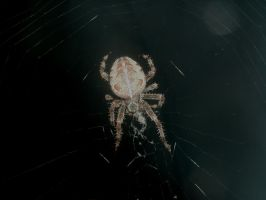 Door Spider by Rubyfire14-Stock