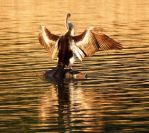 Drying her wings 2 by wildplaces