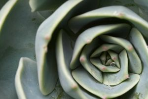 Succulent by knold