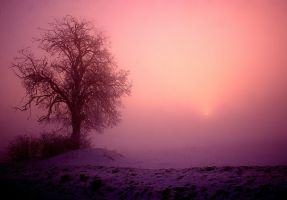 morning fog by 77photons
