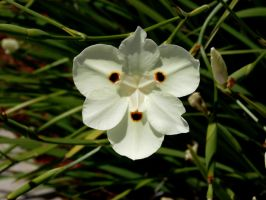 white flower stock 02 by hp-abrasion