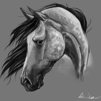 horse portrait 3 by Lenika86