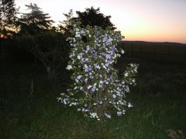 epic plant photo countryside natural sunset by jamaicavb