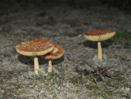 Mushroom Trio a day later by Irie-Stock