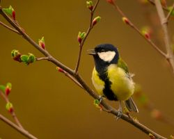 Singing for a sweetheart by noelholland