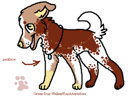Paint Dog Breed