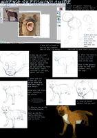 hyena Sketching Guide by whiteicepanther