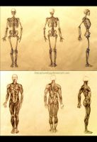 Schoolwork - Human Anatomy by thecapturedspy