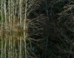Pond Reflection Two by nivaun