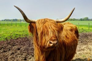 Coo by Raghnall