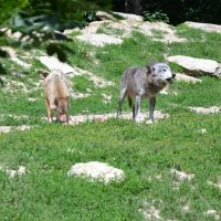 Wolves I by mimose-stock