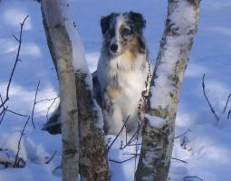 Bandit in the Snow by michiko180