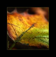 Automne 1 by angiiee