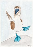 Blue Footed Booby by IckyDog