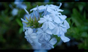 The Lost Garden - Blue White by ogghunter