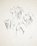 Male Torso study by StyrbjornA