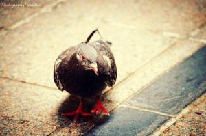 Yes Im A Pigeon by PhotographicCrypto