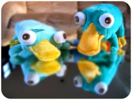 perry and perry by ninjapumpkin