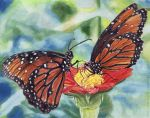 Monarch Butterflies by strryeyedreamr27