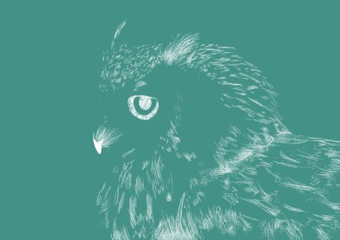 Owl by resqual
