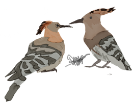 Two Hoopoes by DianaAxeKick