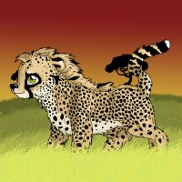 almost there- cheetah by kkcooly