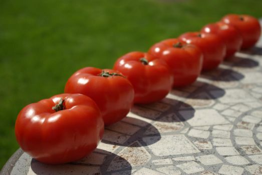 Tomato Row 15247962 by StockProject1