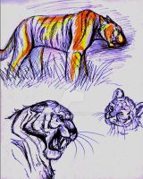 Tiger sketches by Saborcat