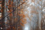 perhaps by ildiko-neer