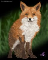 Feral Fox - 8x10 Downloadable by PointyHat